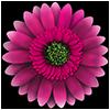 FlowerCare Spiel